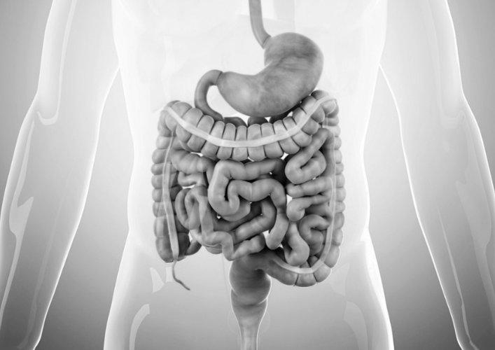 Investigação Gastrointestinal